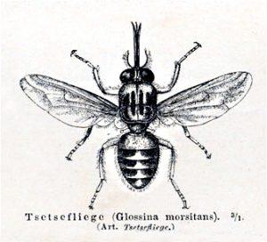 Abb. 3 Tsetsemeyers1880